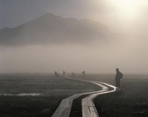 朝もやの中のハイカー 尾瀬6月の写真素材 [FYI03986503]