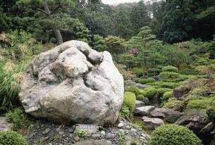 コバルトヒスイの原石 翡翠園の写真素材 [FYI03988020]