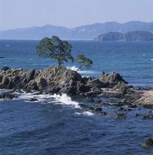 岩礁と松 越前海岸の写真素材 [FYI03988176]