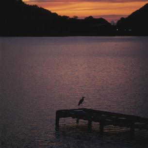 久々子湖暮色の写真素材 [FYI03988181]