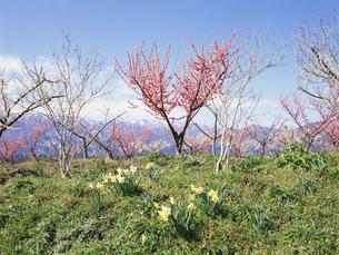 梅林公園より望む鈴鹿山脈御池岳の写真素材 [FYI03988382]