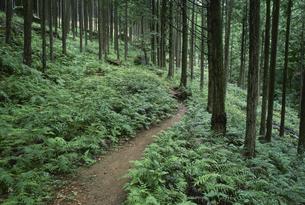 熊野古道 馬越峠 海山町 7月三重県の写真素材 [FYI03988607]