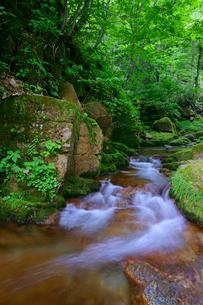 叺谷(かますだに)の渓流の写真素材 [FYI03988674]