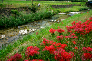ヒガンバナ咲く小川の写真素材 [FYI03988717]
