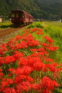 ヒガンバナと長良川鉄道 深戸駅付近の写真素材 [FYI03988722]