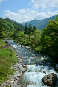 新緑の吉田川 長良川の支流の写真素材 [FYI03988892]