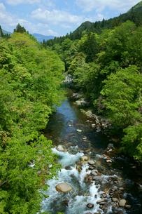 新緑の吉田川 長良川の支流の写真素材 [FYI03988894]