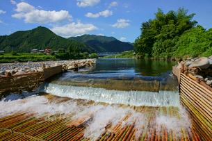 刈安ヤナ 長良川の写真素材 [FYI03988971]