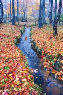分水嶺公園 せせらぎと落葉 ひるがの高原の写真素材 [FYI03989099]