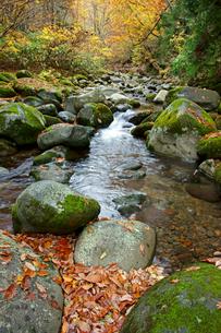 叺谷(長良川源流) 落葉と清流 ひるがの高原の写真素材 [FYI03989105]