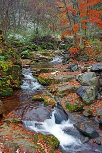叺谷(長良川源流) 紅葉と初雪 ひるがの高原の写真素材 [FYI03989108]