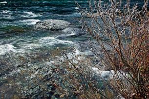 ネコヤナギと清流 長良川の写真素材 [FYI03989176]
