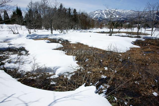 雪解けの湿原と大日ヶ岳 の写真素材 [FYI03989178]