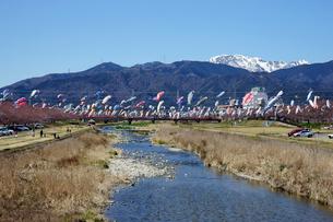 相川の鯉のぼり 伊吹山を望むの写真素材 [FYI03989208]