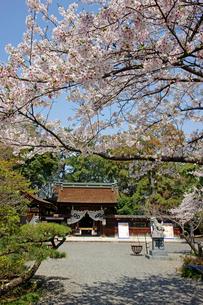 桜咲く治水神社 の写真素材 [FYI03989225]