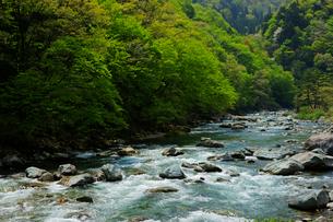 新緑と馬瀬川の写真素材 [FYI03989274]