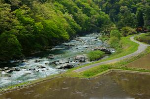 新緑と馬瀬川の写真素材 [FYI03989276]