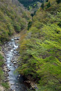 新緑の長良川の写真素材 [FYI03989280]