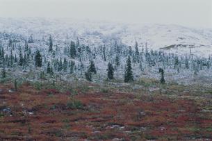 初雪のデナリ デナリ国立公園の写真素材 [FYI03990012]