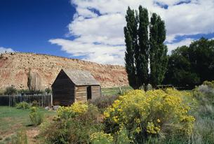 古い家とポプラの木の写真素材 [FYI03990022]