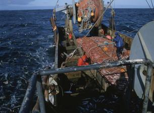 たら漁の写真素材 [FYI03990191]