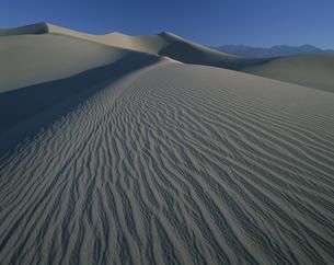 砂丘 9月  カリフォルニア アメリカの写真素材 [FYI03990259]