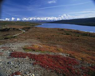 マッキンリー山 デナリ国立公園の写真素材 [FYI03990262]