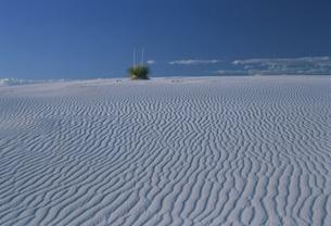 ホワイトサンズ国立公園の写真素材 [FYI03990319]
