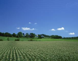 トウモロコシ畑とサイロの写真素材 [FYI03990342]