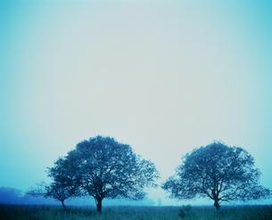 霧の中の樹々の写真素材 [FYI03990441]