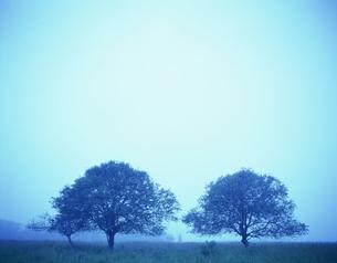 霧の中の木々の写真素材 [FYI03990449]