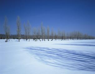 ポプラと雪景の写真素材 [FYI03990498]