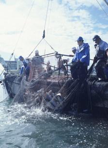 サケ漁の写真素材 [FYI03990519]