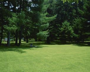 北大植物園の芝生と森 7月  札幌 北海道の写真素材 [FYI03990645]