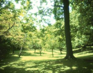 北大植物園の木々7月   札幌 北海道の写真素材 [FYI03990648]