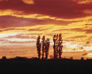 ポプラと夕焼け  羊ヶ丘の写真素材 [FYI03990651]
