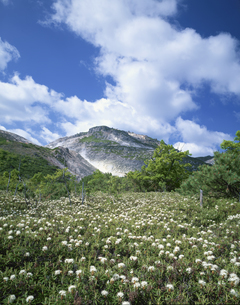硫黄山とエゾイソツツジ  川湯の写真素材 [FYI03990662]