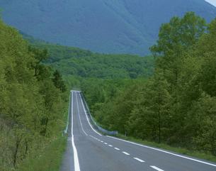 新緑と道路 道々85号線 鹿追北海道の写真素材 [FYI03990674]