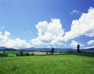 草原とポプラの写真素材 [FYI03990735]