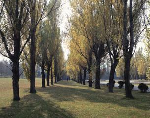 前田森林公園のポプラ並木の写真素材 [FYI03990756]