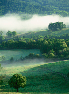 滝川丸加高原展望台より見おろす牧場と朝霧の写真素材 [FYI03990787]
