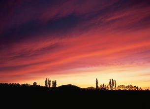 ポプラと夕焼け雲の写真素材 [FYI03990796]