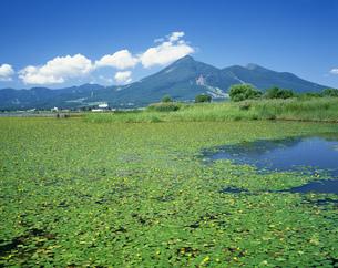 アサザの咲く猪苗代湖と磐梯山の写真素材 [FYI03991217]