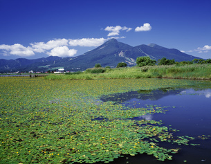 アサザの咲く猪苗代湖と磐梯山の写真素材 [FYI03991221]