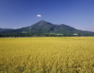 稲と磐梯山の写真素材 [FYI03991224]