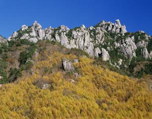 瑞牆山とカラマツの黄葉の写真素材 [FYI03991256]