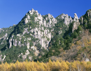 瑞牆山とカラマツの黄葉の写真素材 [FYI03991258]
