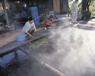 麻釜で山菜をゆでるの写真素材 [FYI03991456]