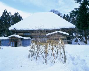 御林 小正月の風習の写真素材 [FYI03991623]