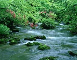 奥入瀬渓流の写真素材 [FYI03991696]